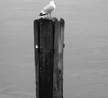 Harbour watch - Bridlington by Andy Beattie