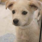 Second Chance Puppy by Natalie  Markova
