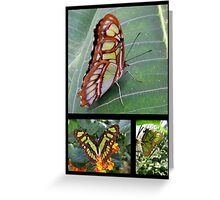 Butterfly (South America) ~ Malachite Greeting Card