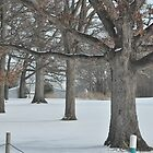 Tree lineup at the golf course by mltrue