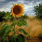 In Utah the Sunflower Smiled  by Michi Fana