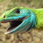 Smiling Lizard by fenist