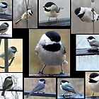 Cheerful Chickadees by WalnutHill