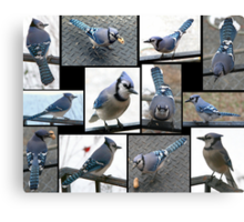 Jazzy Blue Jays Canvas Print