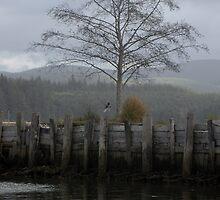 Willapa Bay Foggy Afternoon - - Cards by Maria A. Barnowl