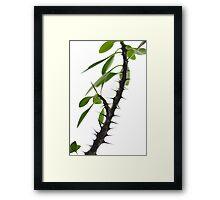 crown of thorns Framed Print
