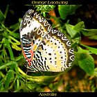 Butterfly (Australia) ~ Orange Lacewing by Kimberly P-Chadwick