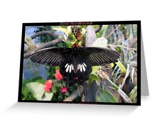 Butterfly (Asia) ~ Rose Swallowtail Greeting Card