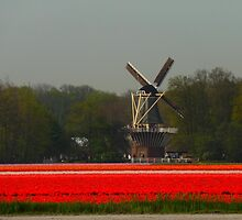 windmill with tulips by supergold