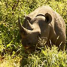 black rhino by petraE