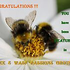 Bee and Wasp Passions Banner by AnnDixon