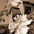 My Spanish Rose by HEIDI  HORVATH