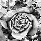Black Rose by HEIDI  HORVATH