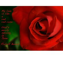 A Red, Red Rose, My Love Is Like Photographic Print