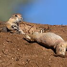 Kung Fu Prairie Dogs 3 (The Knockout) by kurtbowmanphoto