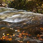 Autumn in Ricketts Glen 3.0 by Murph2010