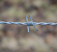 barb wire by alan700