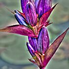 Bottle Gentian - Art by Marcia Rubin