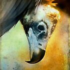 Cinerous Vulture Portrait by alan shapiro