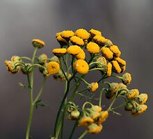 Tansy in The Fall by SharonLMadison