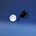 Magpie Moon  by larry flewers