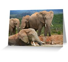 Afternoon Bath - African Elephants Greeting Card