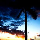 Coconut Tree at Sunset by Josh Kennedy