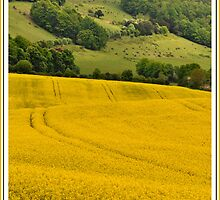 St Barnabas Church and rapeseed field by Catherine Ames