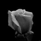 Fiore Delicato by Natalie Ord