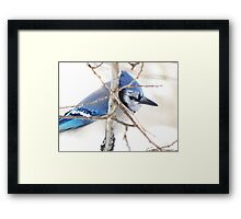 Am I Blue?! Framed Print
