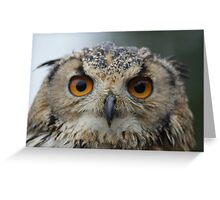 Nipper, The Bengal Eagle Owl Greeting Card