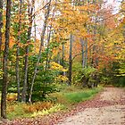 Bear Road in Autumn by Lynda Lehmann