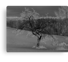 A Lone Tree Canvas Print