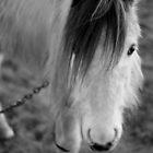 Monochrome Horse Close Up by montydawson