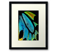 Cairns Birdwing Detail II Framed Print
