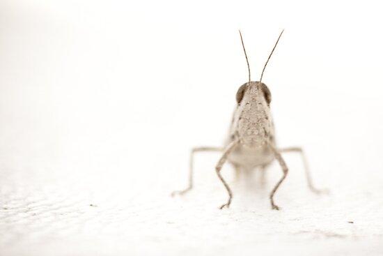 Grasshopper by Good-Thanks