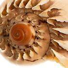 Sea shell macro detail by homydesign