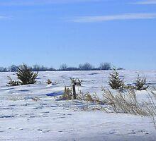Wind Swept Prairie ! by Jan Siemucha