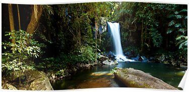 Curtis Falls, Mount Tamborine. #2 by Peter Doré