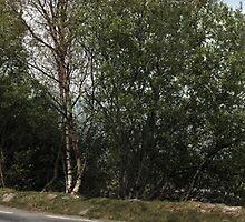 leprechaun crossing by morrbyte