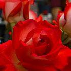 roses by yamiyalo