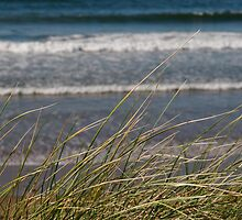 long dune grass by morrbyte
