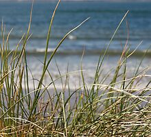 long dune grasses by morrbyte