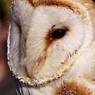 Barn owl portrait by Shaun Whiteman