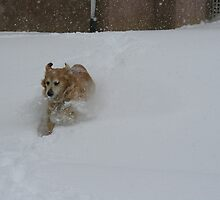 Yippee! More Snow! FEATURED PHOTO by AliceMc