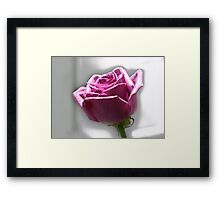 A famous rose alone. Framed Print