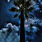 Palm in the Moonlight by Brenda Boisvert