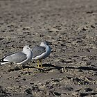Gulls Day Out by mojo1160