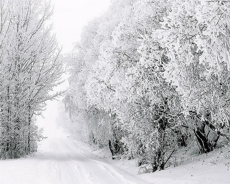 Winter Road by Warren Brown