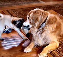 SweetPea and Rosco - Tug With A Toy by Barb Miller